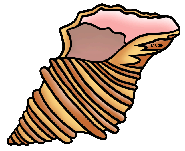clip art freeuse library Shell clipart.  collection of high.