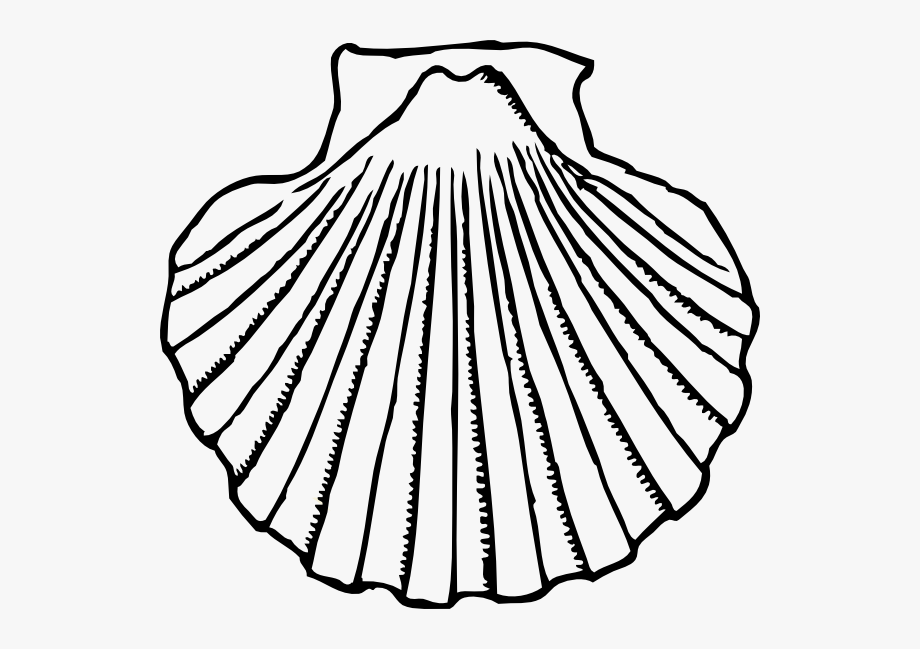 freeuse Sea free . Shell clipart black and white
