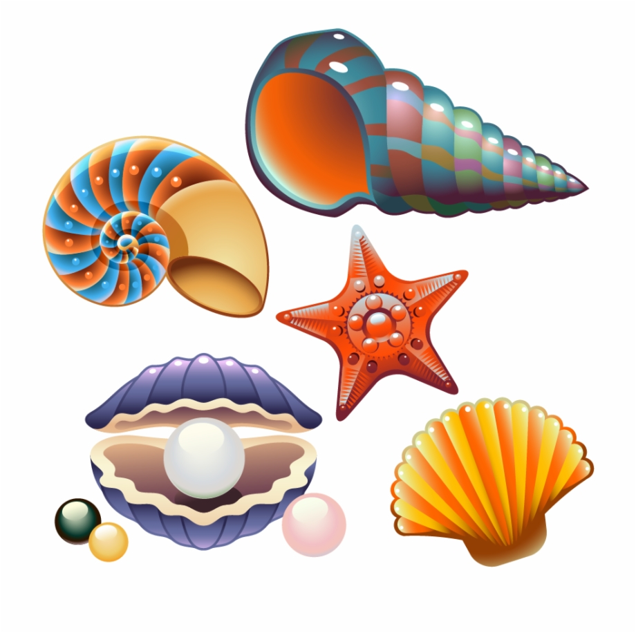 banner royalty free download Shells clipart. Clam seashell nautilidae clip