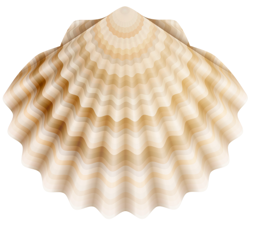 image royalty free Shells clipart shellfish. Realistic shell png clip.