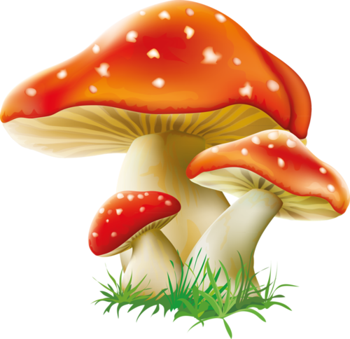 jpg royalty free library tubes champignons
