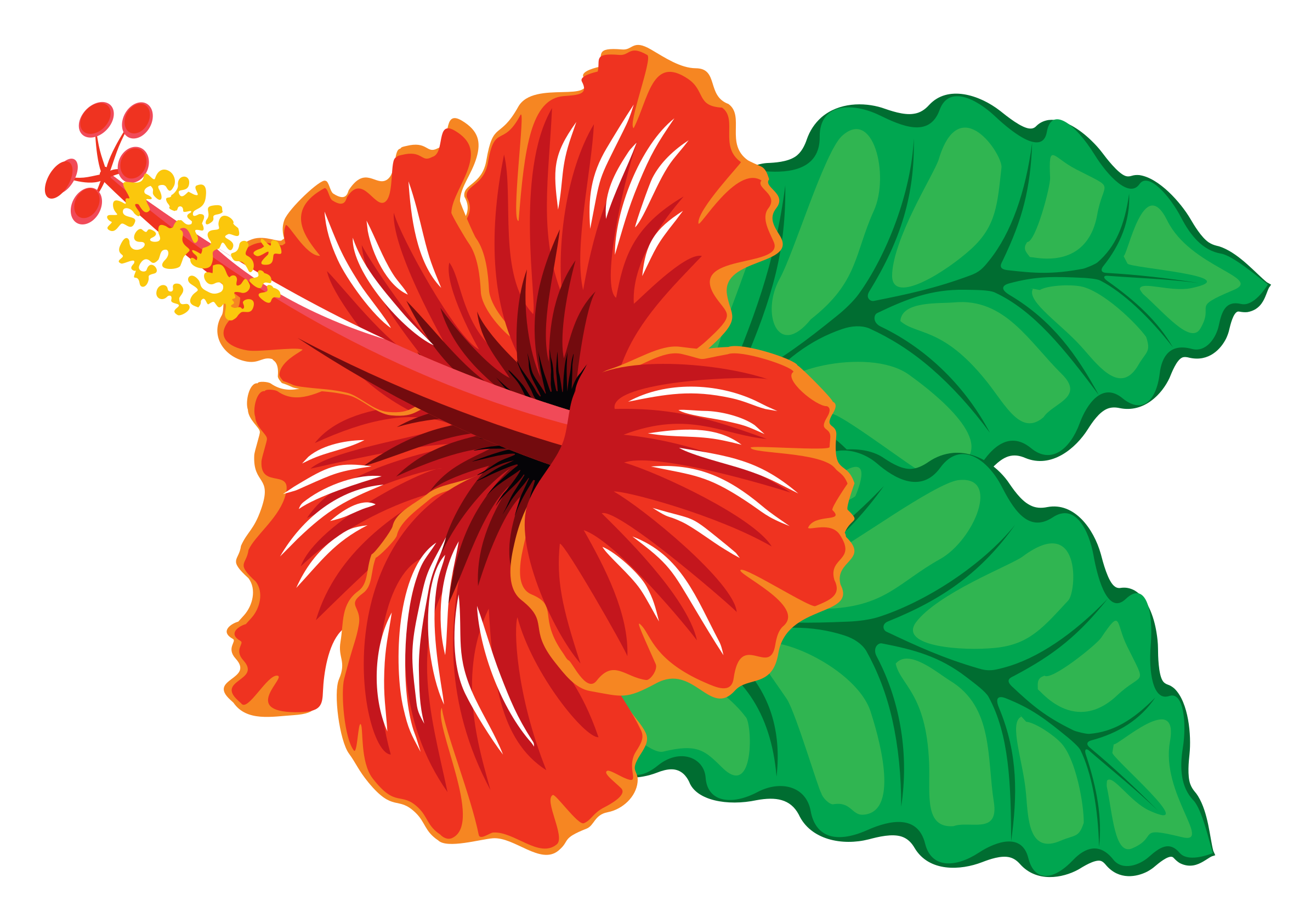 picture free download Hibiscus clipart. Flower boarder free on.