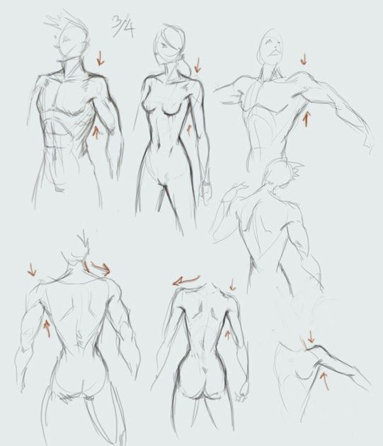 picture library library Drawing torso with shoulder and arm basic Male
