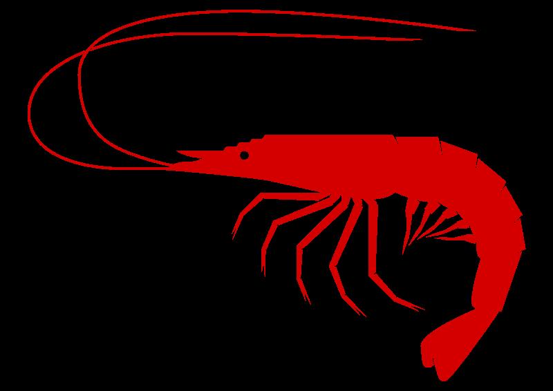 jpg royalty free download Shrimp Clipart transparent background