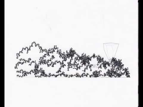 jpg transparent download Landscape basic elevation . Shrub drawing