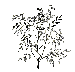 banner black and white library At getdrawings com free. Shrub drawing