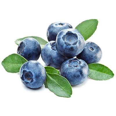 vector library Transparent fruit blueberry. Blueberries png images stickpng