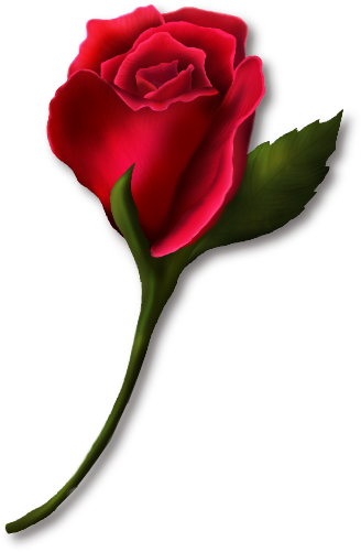 jpg royalty free stock Png real and vector. Single rose clipart