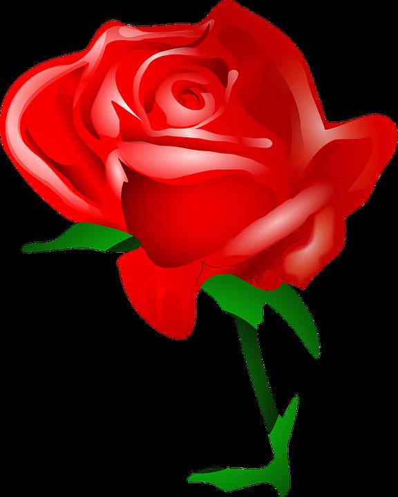 jpg download Free image on pixabay. Single rose clipart