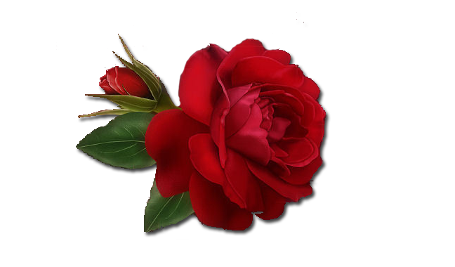 png Single Rose Clipart