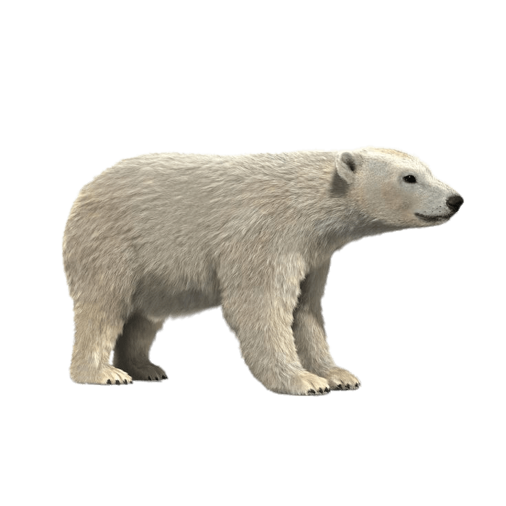 clip black and white Sitting polar bear clipart. D model png photos