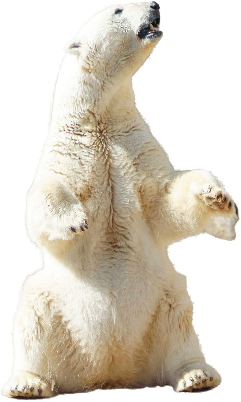 banner black and white Transparent png stickpng. Sitting polar bear clipart