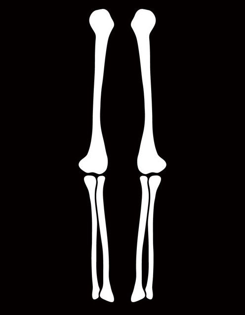 vector library download Halloween clip art . Skeleton arm clipart.