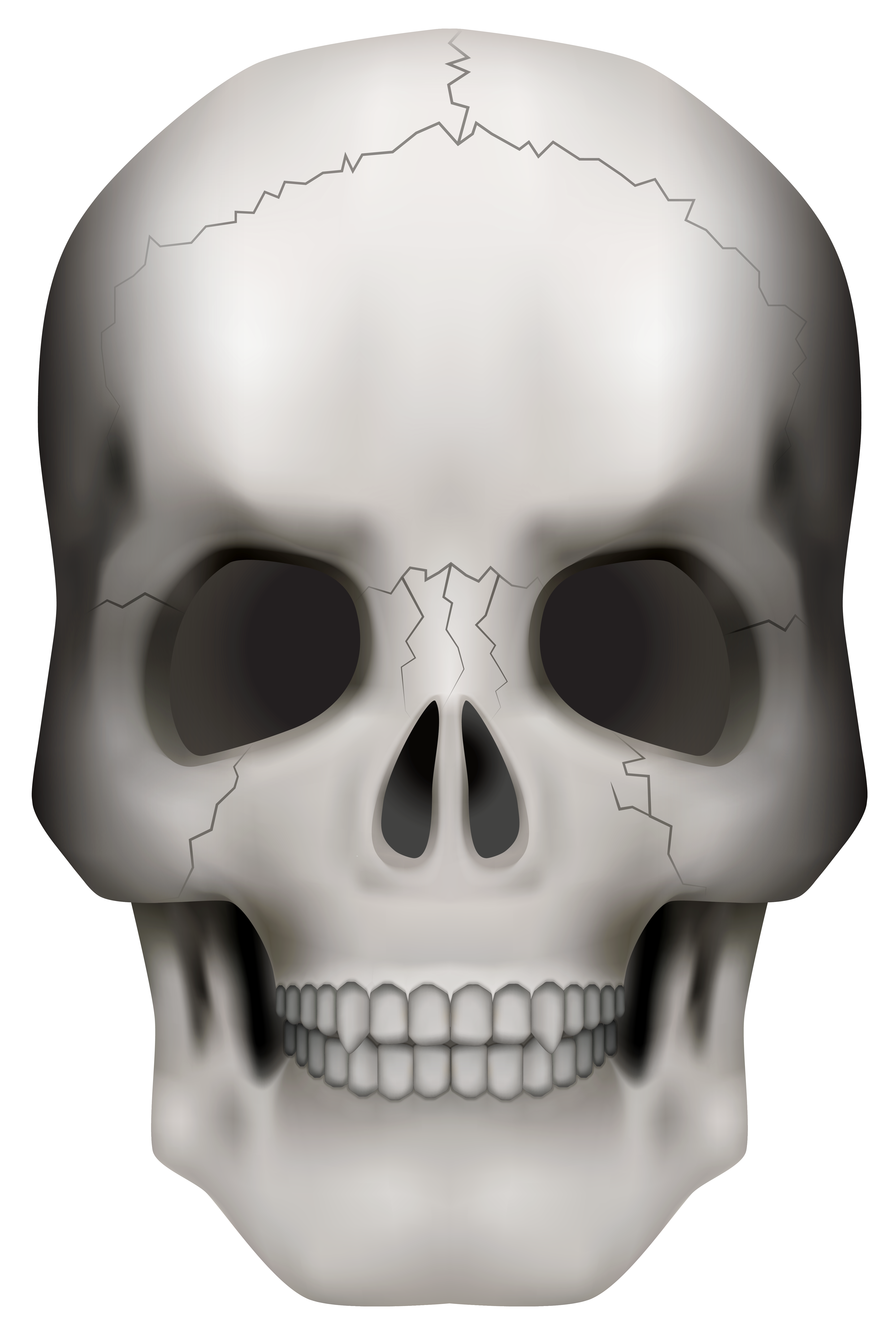banner royalty free Png image gallery yopriceville. Skull clipart.
