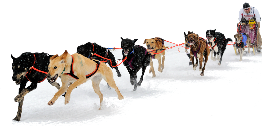 image black and white stock Sled Dog PNG HD Transparent Sled Dog HD