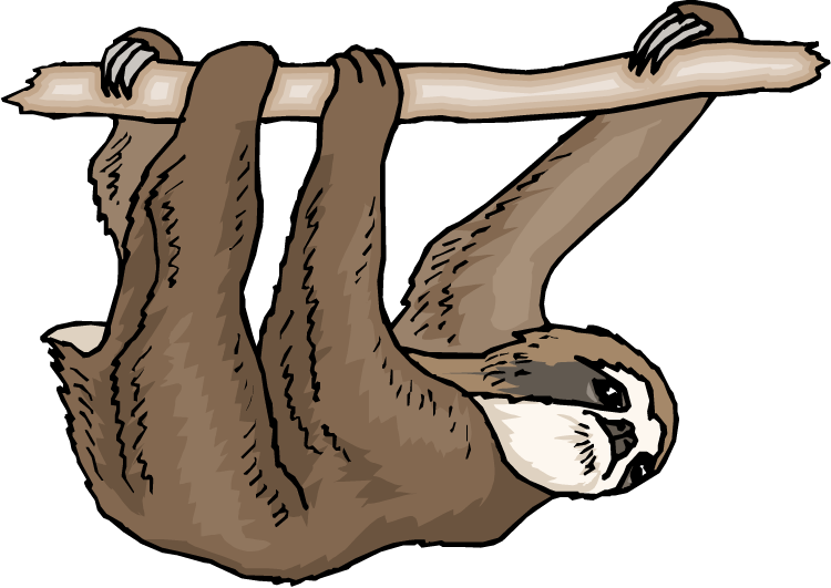 png royalty free download . Sloth clipart.