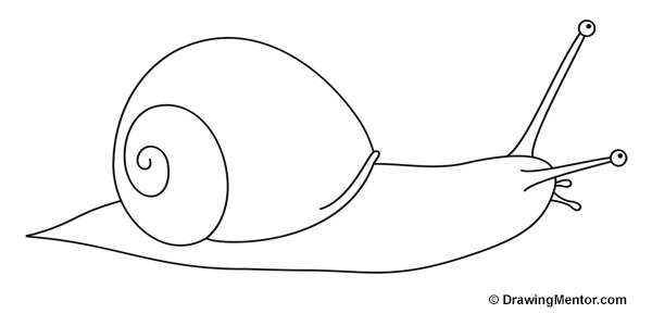 graphic library stock How to Draw a Snail Tutorial