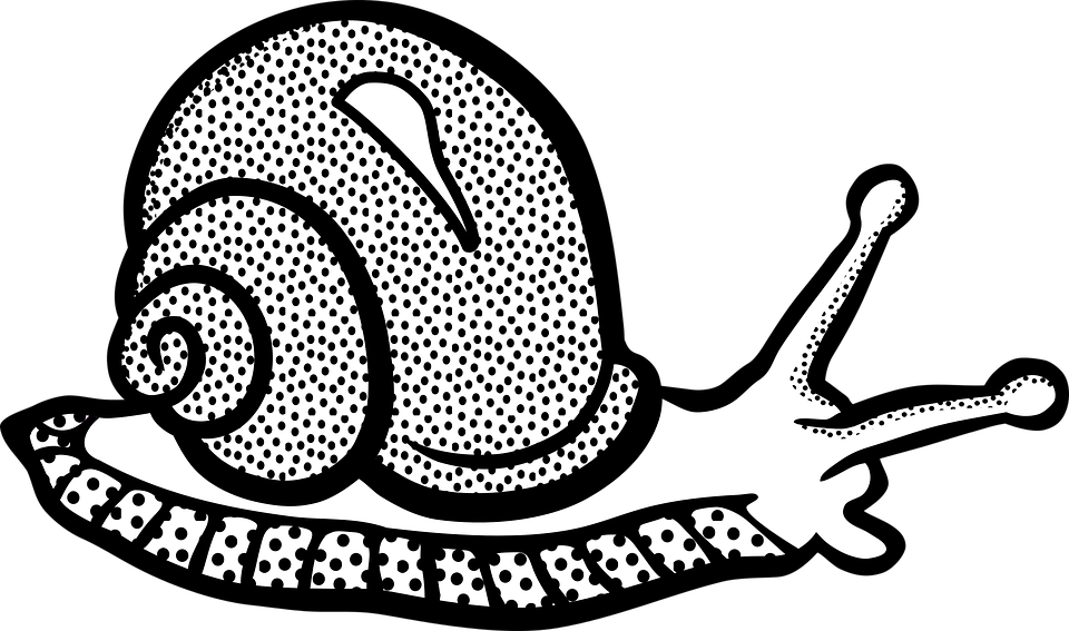 png library library Mollusc Clipart Snail