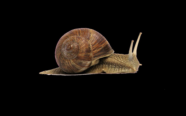 clip free library Garden snail Gastropods Clip art