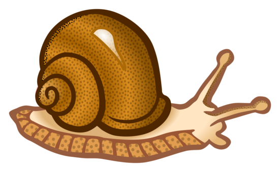 svg library stock Seashell Gastropods Snail Gastropod shell Conch free commercial