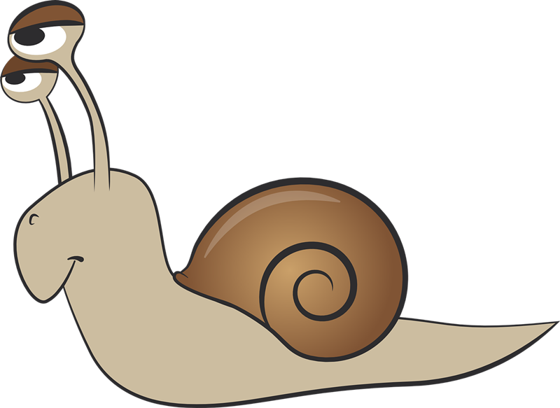 clip art library library Collection of free Gasteropod clipart mollusk