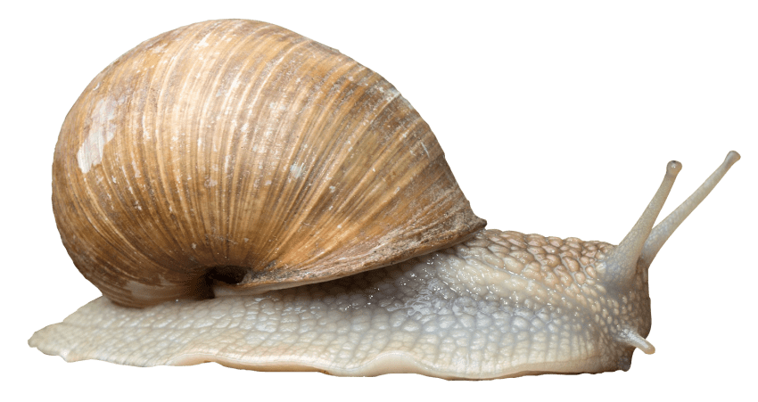 clip freeuse download Snail Png