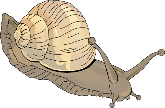 jpg freeuse download Snails water clipart