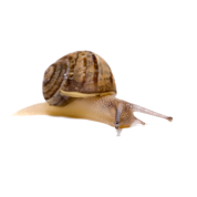 image black and white library transparent snail background #117375636