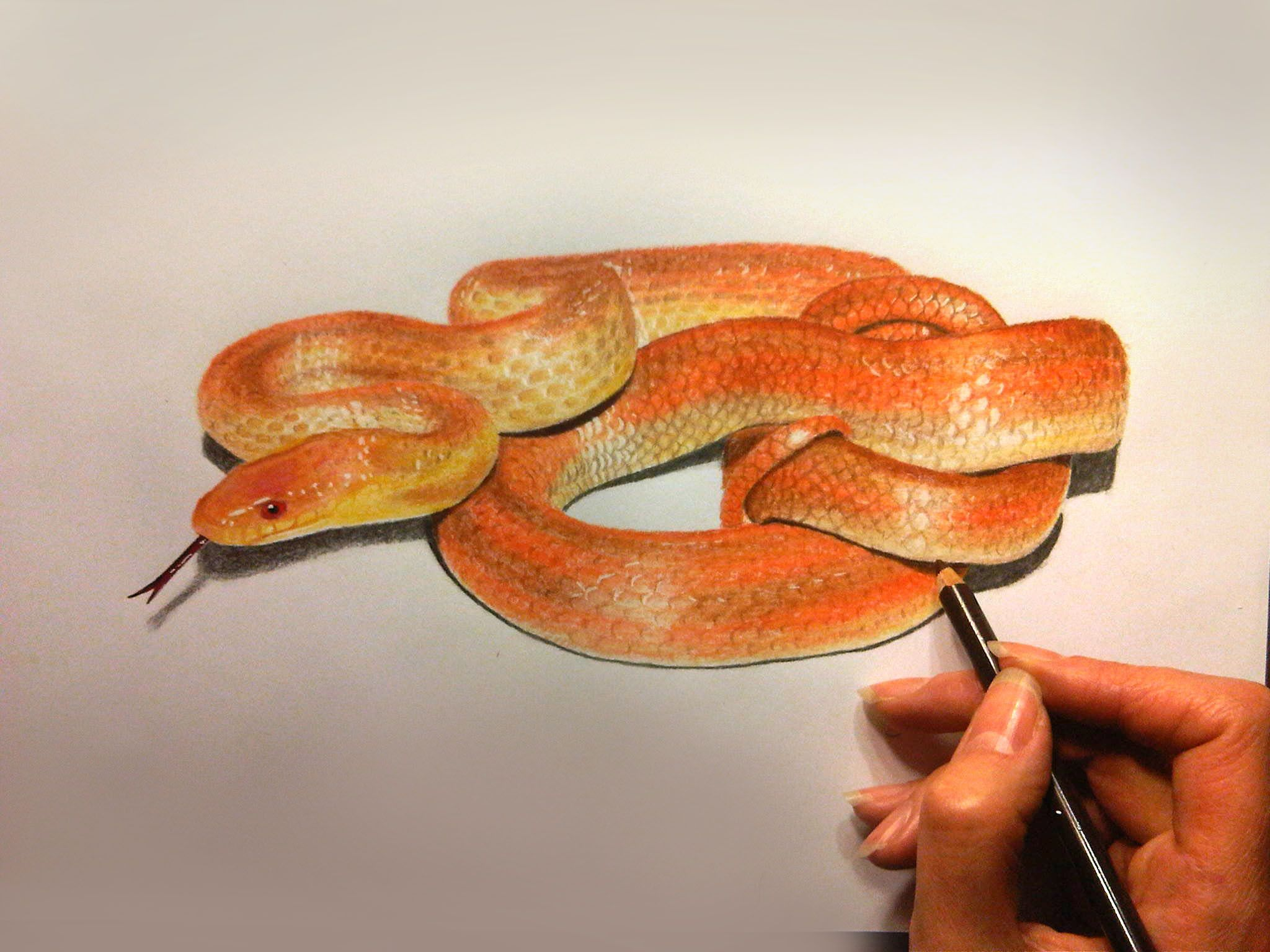 png freeuse How to draw a snake with colored pencils in