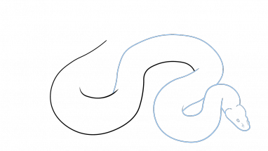 free stock Drawing snake animal. How to draw a