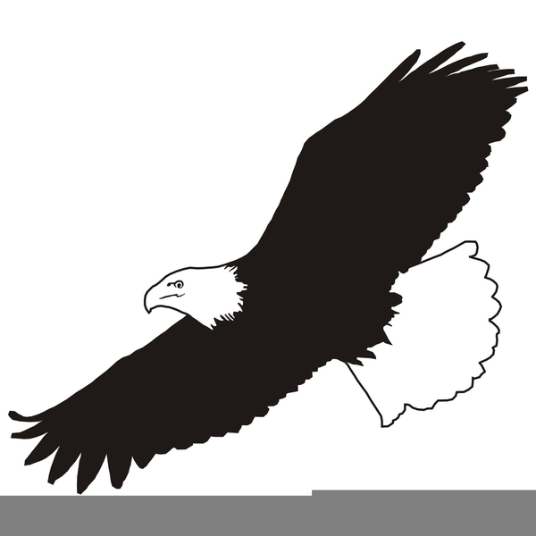 png royalty free download Free eagle images at. Soaring clipart.