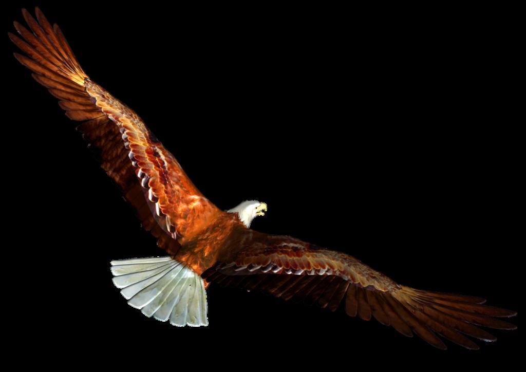 vector transparent Eagle png peoplepng com. Soaring clipart.
