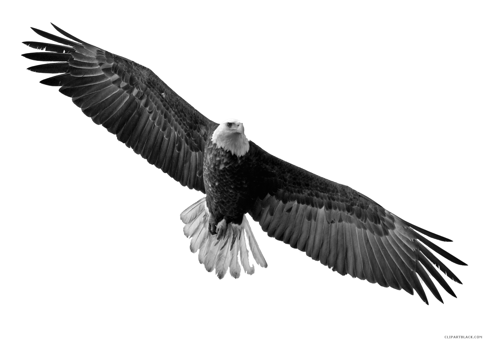 picture library stock Soaring clipart. Eagle clipartblack com animal.