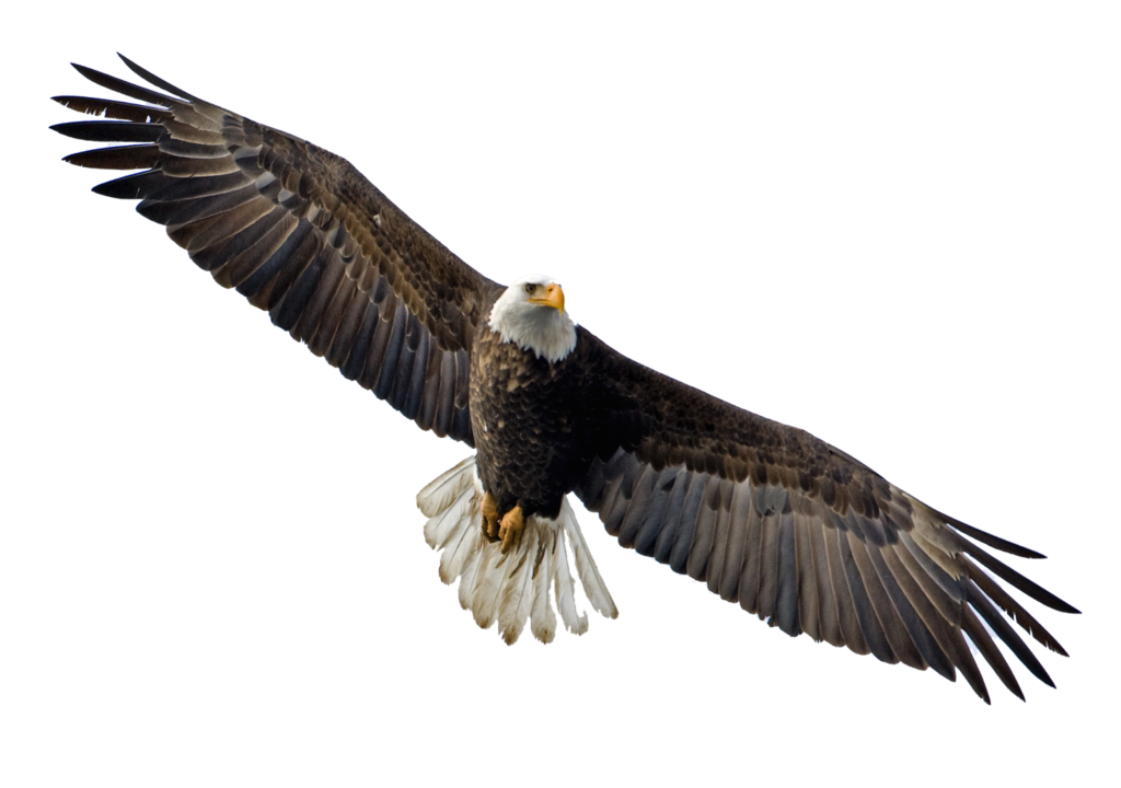 vector royalty free stock Soaring Eagle Transparent PNG