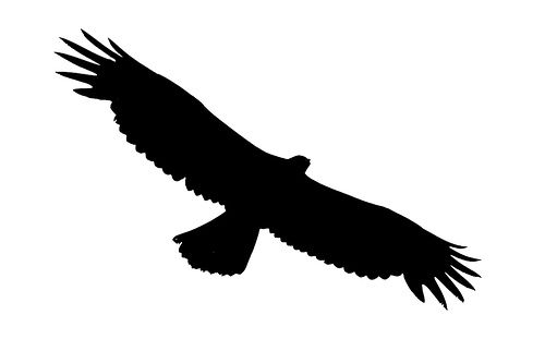 jpg free download Soaring clipart. Eagle best jewelry tutorial.