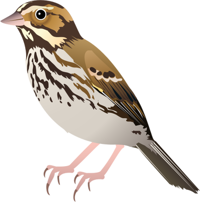 clipart library Sparrow PNG images free download