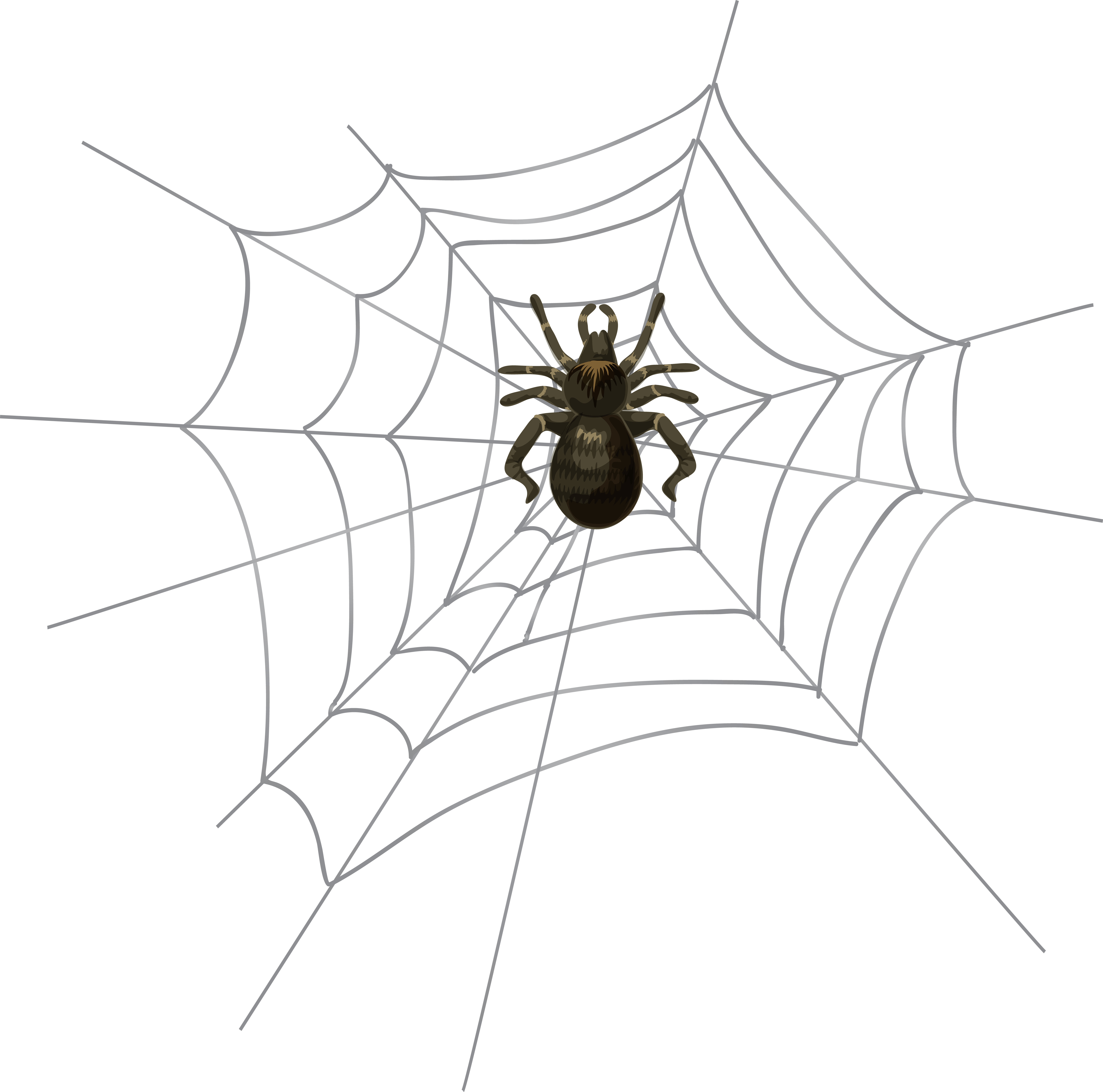 svg library Free spider web clipart. Halloween png clip art