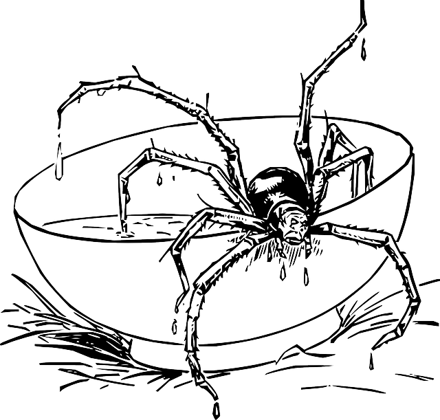 jpg library stock Spider In Web Drawing at GetDrawings