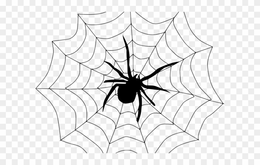 vector free Silk a drawing . Spider in web clipart