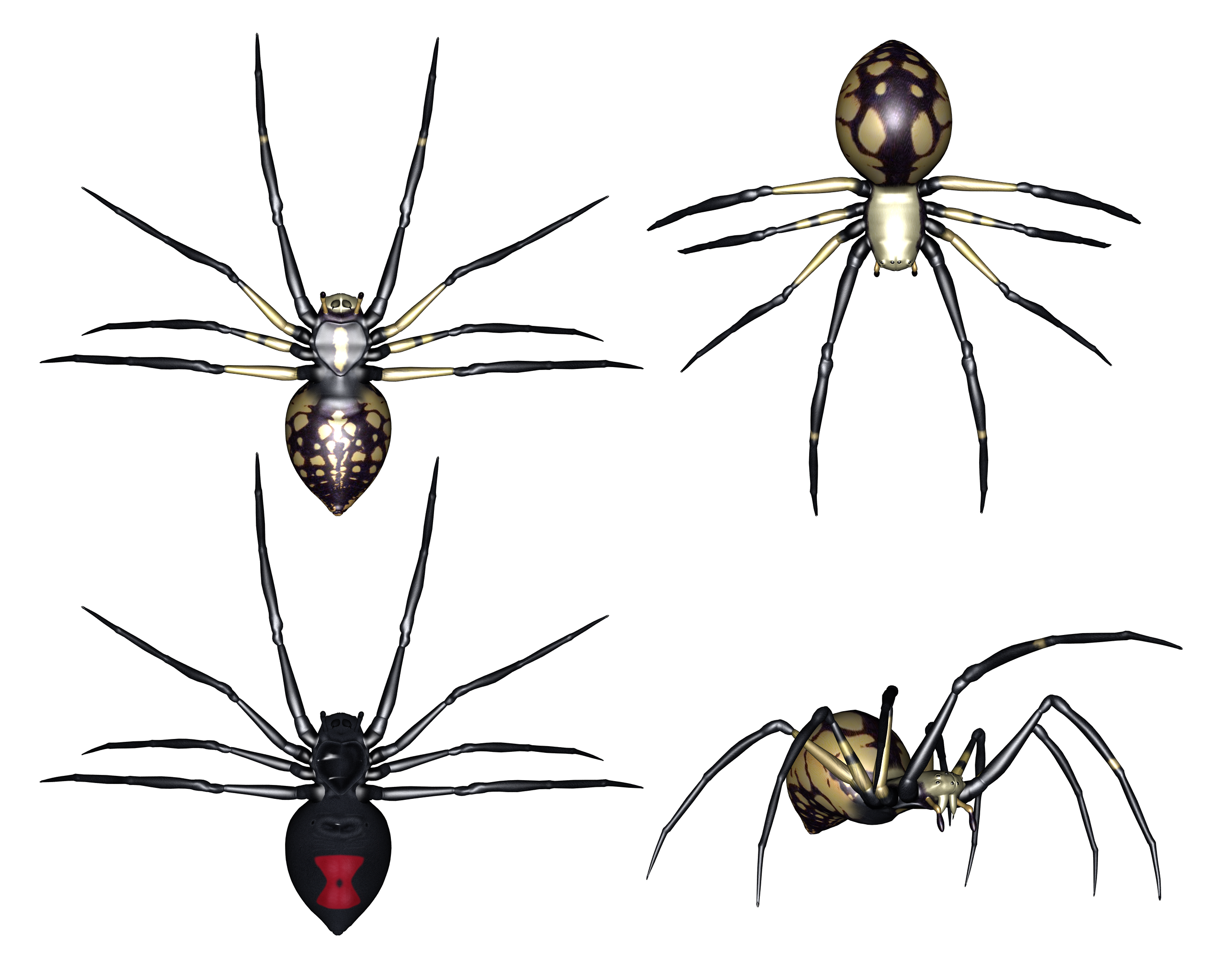 clip art free Set of Spiders Clipart