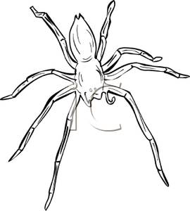 banner free Outline royalty free picture. Spiders clipart wolf spider