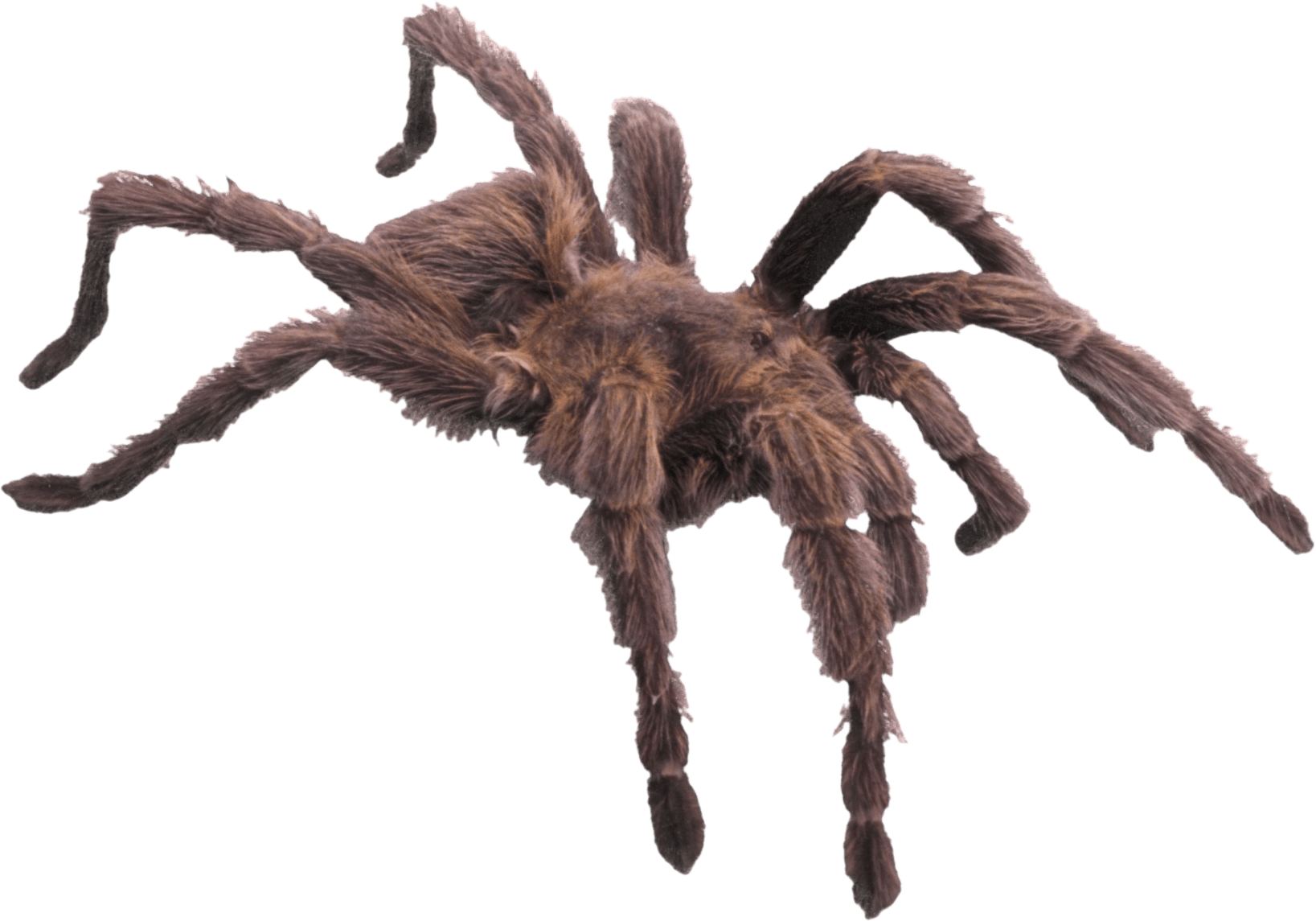 picture library Spiders clipart wolf spider. Hairy brown transparent png