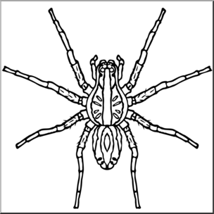 clip art black and white Spiders clipart wolf spider. Clip art b w