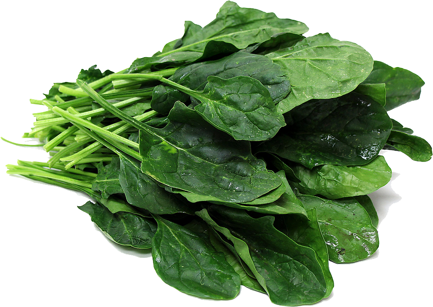 picture transparent download Free Spinach PNG File