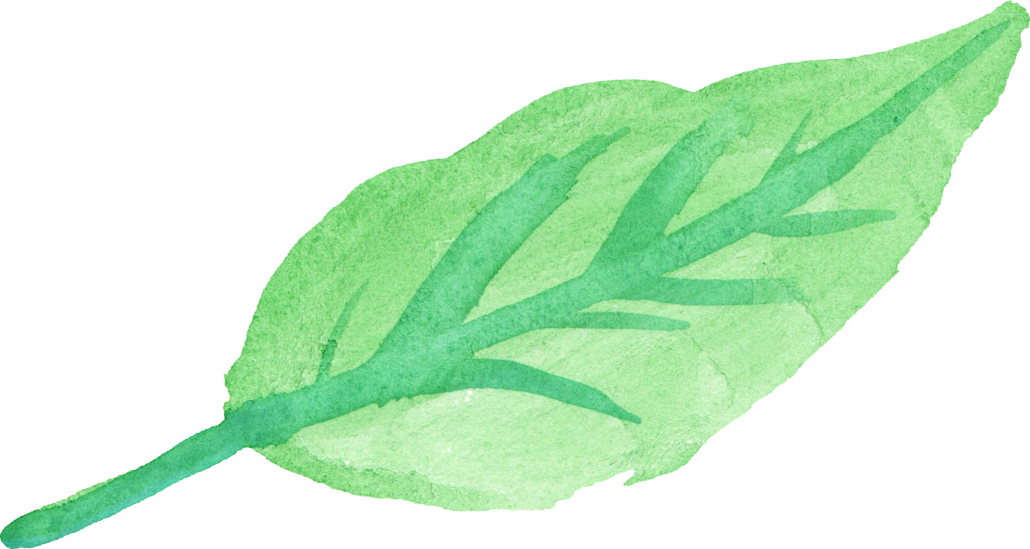 vector free stock Basil drawing leaves painting.  watercolor leaf png