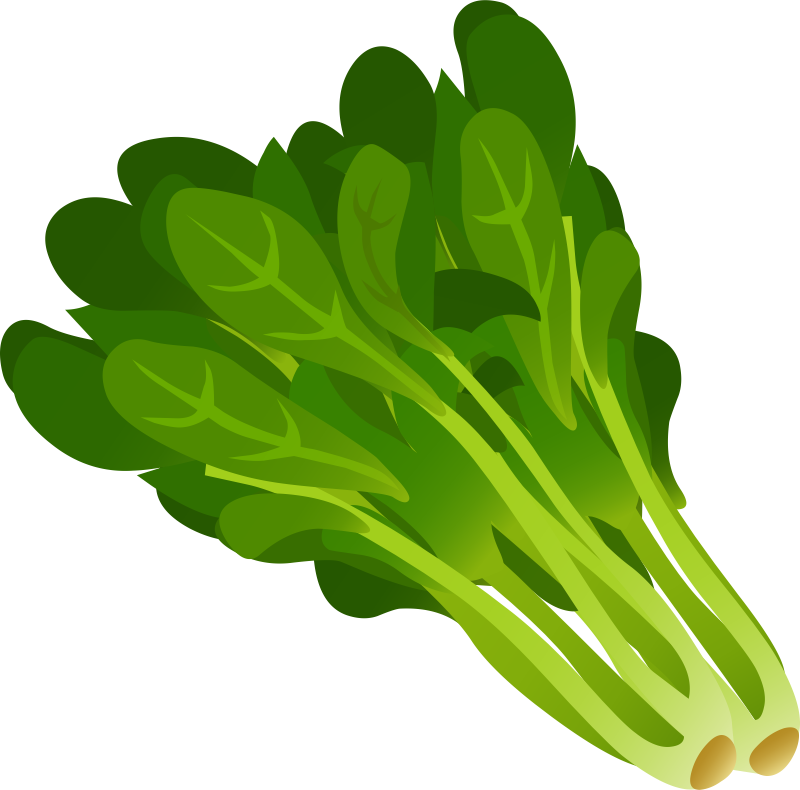 vector download Spinach Clipart