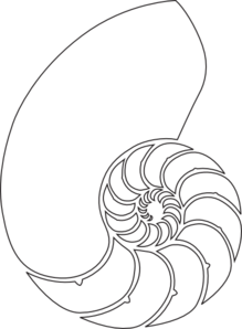 svg library stock Outline clip art for. Spiral clipart shell nautilus