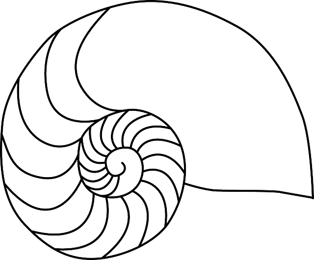 clip art library library Spiral clipart shell nautilus. Drawing at getdrawings com