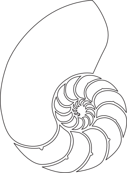 jpg black and white download Spiral clipart shell nautilus. Drawing google search tattoo