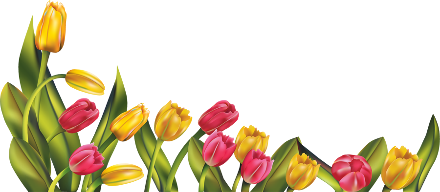 graphic Png res tulip border. Spring clipart borders